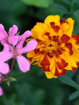 Richard Trinka